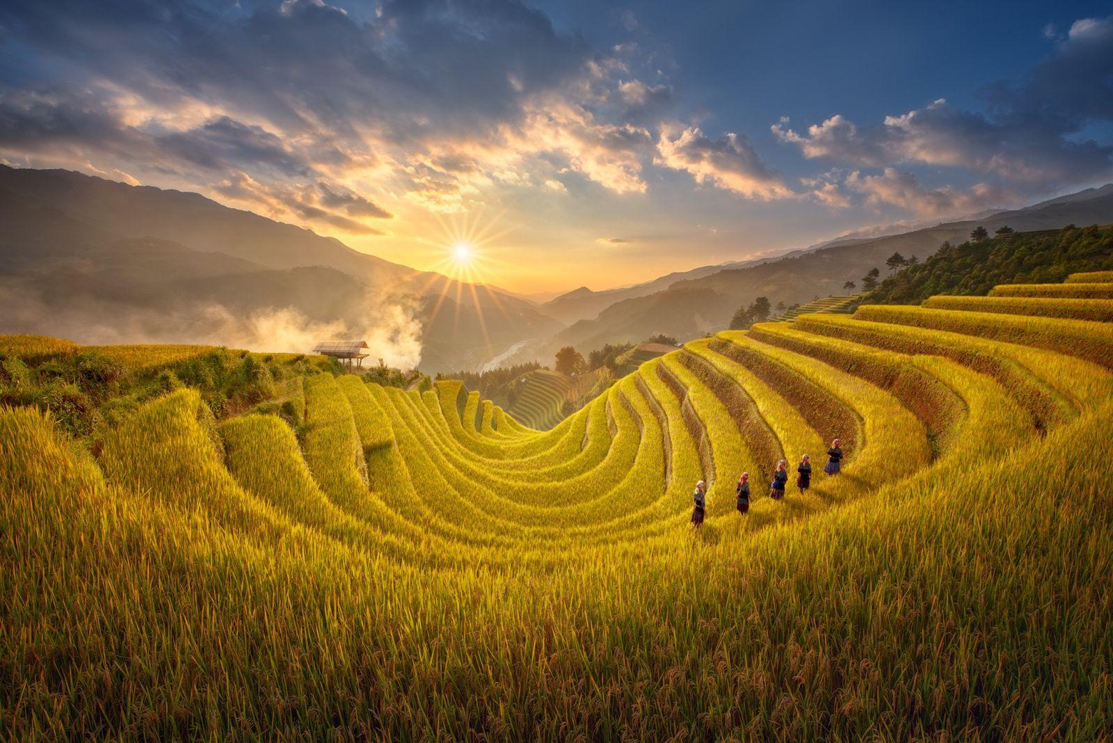Du khách có cơ hội chiêm ngưỡng với cảnh sắc tuyêt đẹp của lúa, với mùi thơm đặc trưng của lú