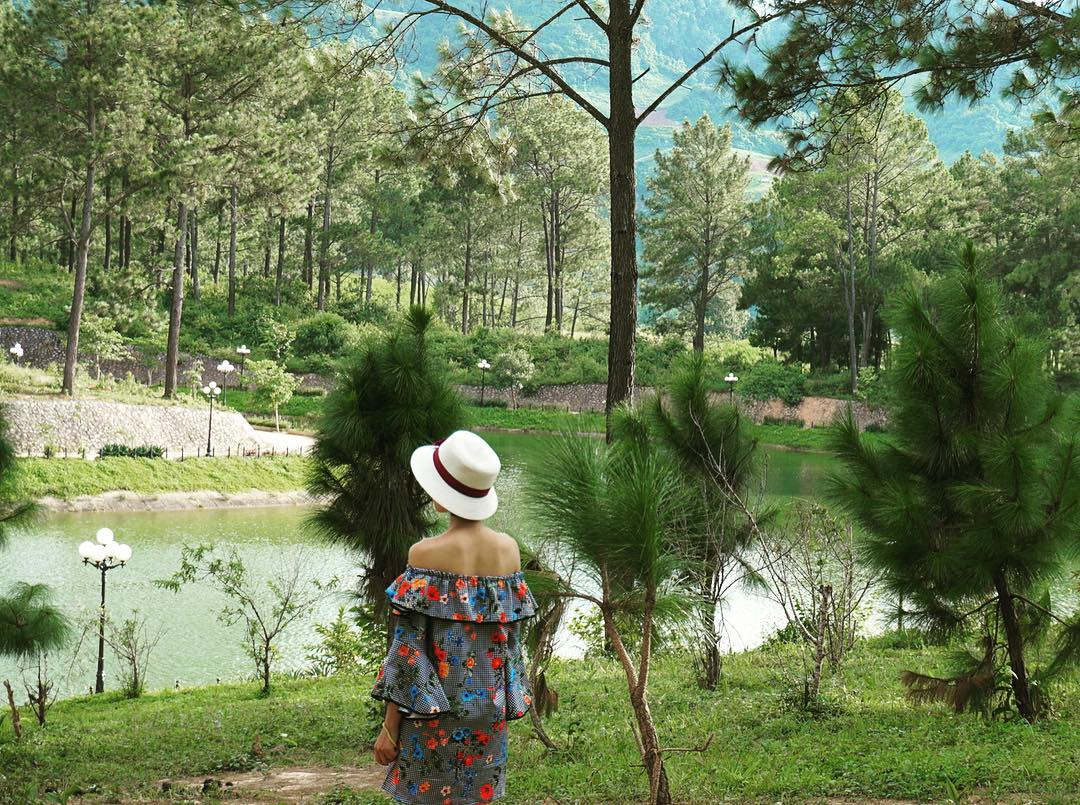 Rừng thông Bản Áng với rừng thông xanh cao vút, thẳng đứng mạnh mẽ
