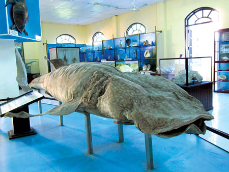 Hiện Vật Được Trưng Bày Trong Viện Hải Dương Học
