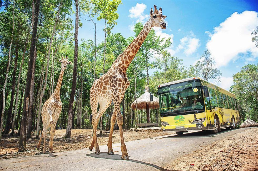 Công viên vườn thú Vinpearl Safari - Tận mất ngắm nhìn thế giới động vật hoang dã