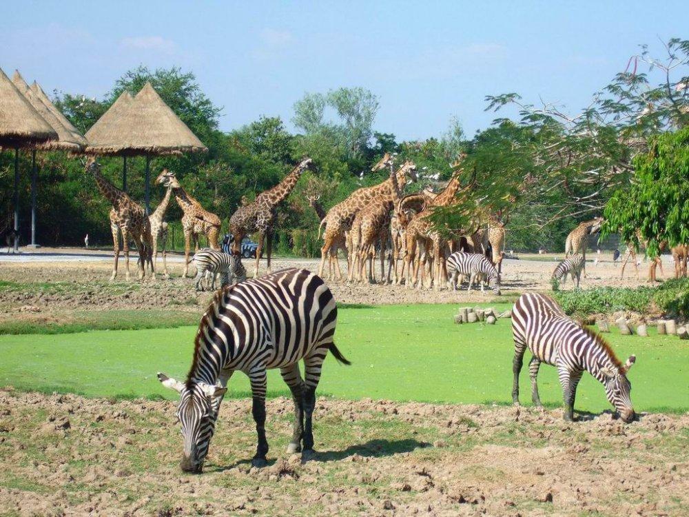 Công viên vườn thú Vinpearl Safari - Phú Quốc